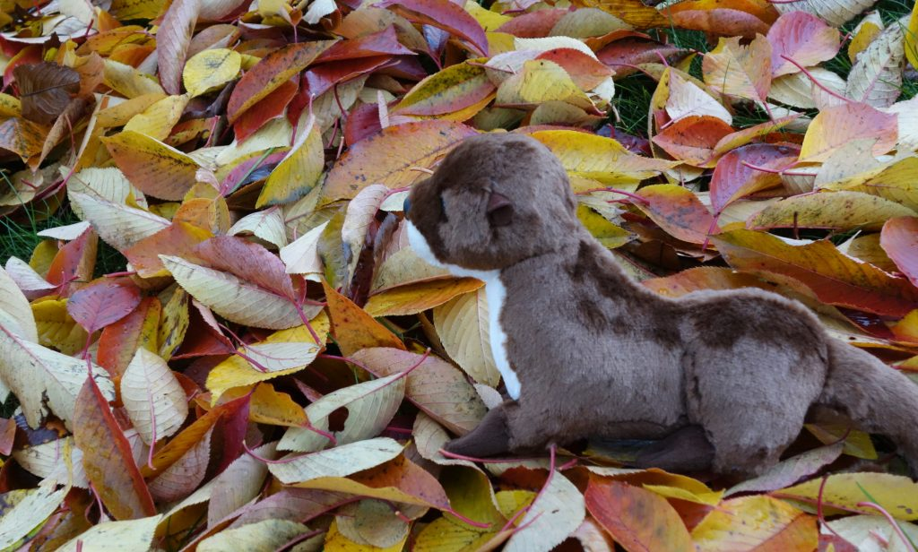 [Horace the Otter, among the leaves]