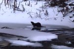 🏞 NATURE NOTES: Real Live River Otters