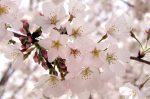 🖋 🌸 WONDERFUL WORDS: Loveliest of Trees